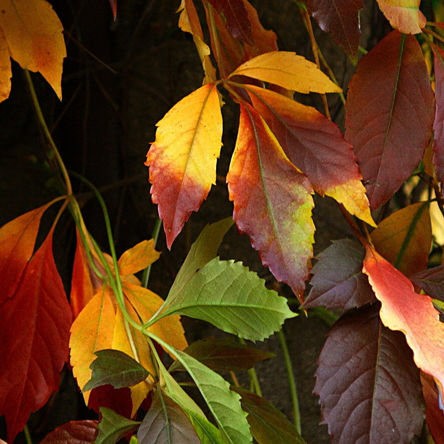colorful_leaves_by_svitakovaeva-d4cs2r0